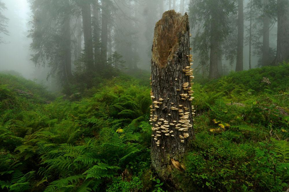 Bödmeren Urwald in der Schweiz