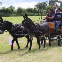 Fahrprüfung mit Eseln