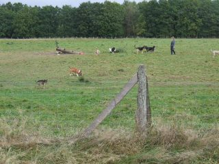 Foto: Stiftung Naturschutz Schleswig-Holstein