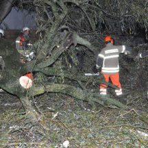 tbf121117_Luebeck-Baum-auf-Strasse_Kroeger_005