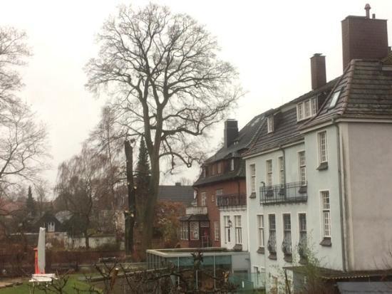 Walldorf-Baum-gefaellt_Halenza_0001