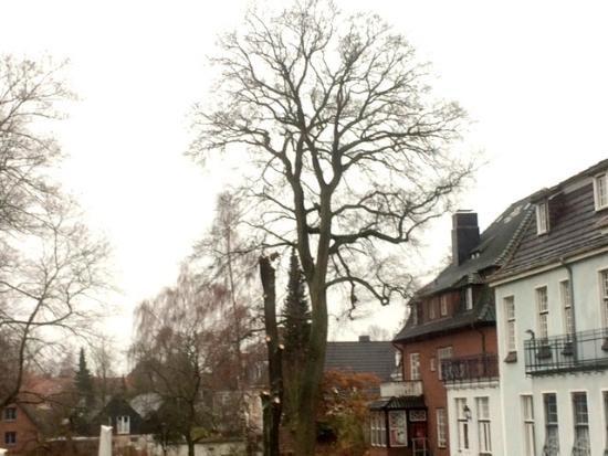 Walldorf-Baum-gefaellt_Halenza_0002