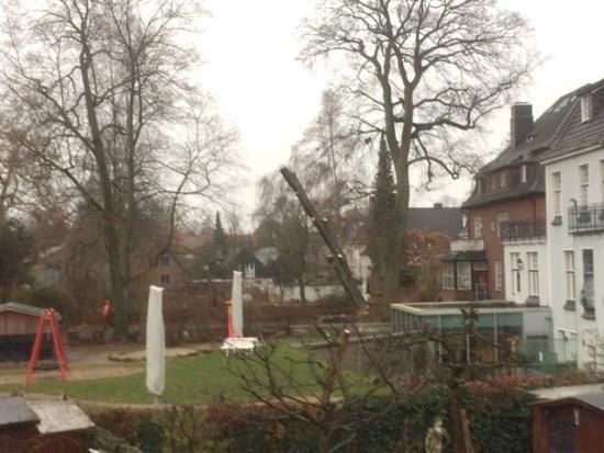 Walldorf-Baum-gefaellt_Halenza_0004